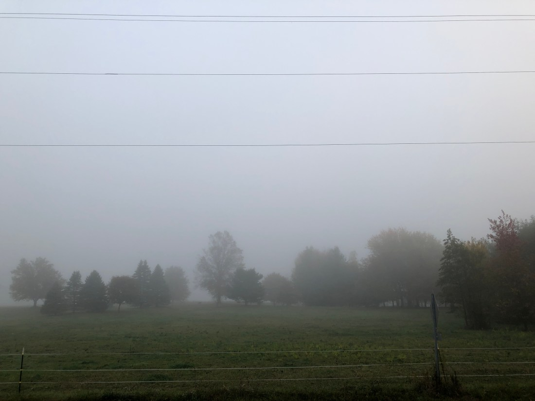 fog at the plantation